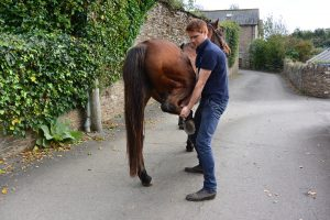 South Moor Equine Vets Devon