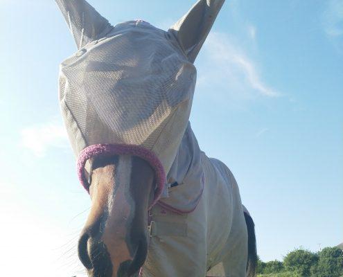 South Moor Equine Vets Devon