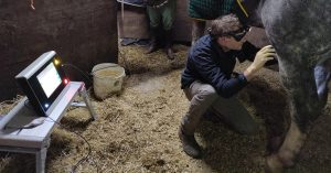 Devon County Equine Vets