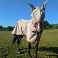 Equine Vets Devon