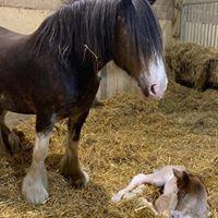 Horse Vets South Devon