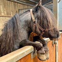 Horse Hospital Devon