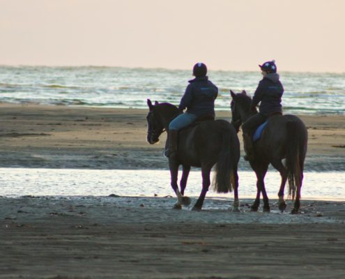 Horse riding devon