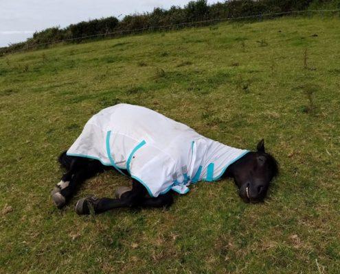 Best Horse Vets Devon